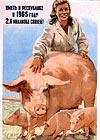 Иметь в республике в 1965-м году 2,6 миллиона свиней!