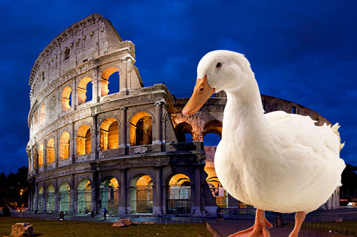 «Гуси Рим врятували»