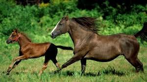 """Результат пошуку зображень за запитом """"коні та насіння"""""""